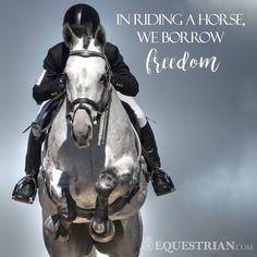 We borrow freedom, we are equestrians ❤                              …