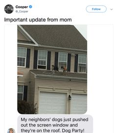 one time my dog got on to the roof and fucking ran off of it! He was fine. Funny Animal Memes, Cute Funny Animals, Funny Cute, Hilarious, Funny Tweets, Funny Memes, Funny Blogs, Bad Memes, Funny Fails