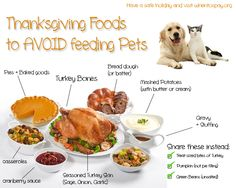 #thanksgiving #dogs