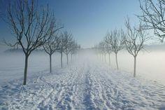 Niederrhein-Idyll Kleve im Winter