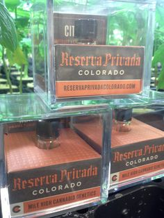 Reserva Privada Seeds Guaranteed feminized , seven seeds come in a vial. Strains available: Hurricane (Panama Punch x LA Confidential), Sour Punch (Panama Punch x Sour diesel), and Citrix ( Grapefruit x LA Confidential)  $49.00 A Box