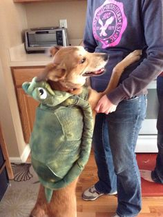 My little puppy in her turtle costume
