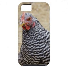 Plymouth Barred Rock Hen Photograph iPhone 5 Cases