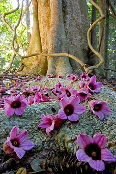 Fallen flowers on rainforest floor, Australia