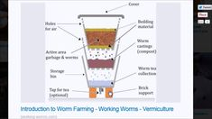 How Does a Worm Farm Work Plus Tips