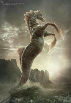 Hippocampus- Greek myth: a horse with the back half of a fish. It had a fin as a mane and fins else where on the body. They had green scales all over. They were adults of sea-horses. They were ridden by water nymphs and water gods.