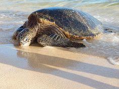 Sea Turtle by Richard Garrett