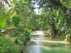 acre of flat fertile farm land for sale with multiple rivers flowing through the property Jamaica Country, Star Apple, Fixer Upper House, Land For Sale, Fruit Trees, Fertility, Rivers, Acre, Landing