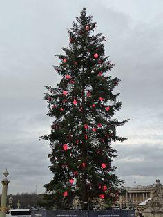 Christmas tree on Place de la Concorde, Paris. the tallest in Europe. http://www.pariscotejardin.fr/2012/12/le-sapin-de-noel-geant-de-la-place-de-la-concorde-paris-1er/