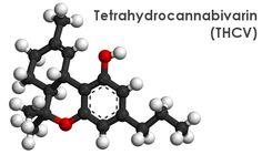 http://pgmcg.nl/diabetes-suikersiekte-en-het-gebruik-van-medicinale-cannabis/   FTHCV is produced naturally by the cannabis plant, but the amount varies by strain.