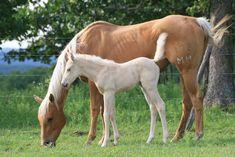 I got you guys a unicorn and a baby pegasus! :D Hope you like them! I love you guys! Unicorn Fantasy, Real Unicorn, Unicorn Horse, Image Painting, Rare Animals, Photoshop Design, Palomino, Photomontage, Pegasus