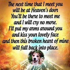 Macy we will be together in heaven❤️ #dogsayings
