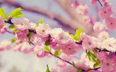 foto de flores rosadas brotando