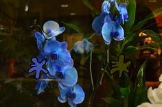 Azul Cobalto (13) Verde Helecho(14)