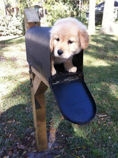 "I like the dog fits in the post and it is cute.  Someone commented this picture ""Special Delivery"", it is really nice."
