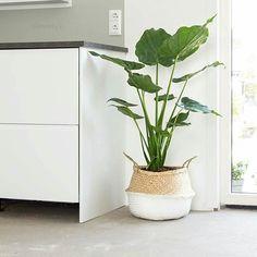 @keeelly91 heeft onze mand, gemaakt van zeegras, gebruikt voor een mega toffe plant! Wat een eyecatcher, hè?! #xenos #zeegras #mand #homedeco #inspiration #decoration #kitchen #wonen #naturallook