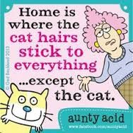 basically....anyone who has a cat or has been around them would understand