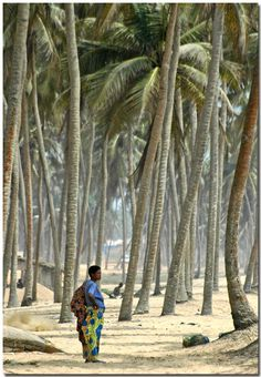 Benin: Among the palmtrees (Copyright ©️ – Attila Szili) Benin Travel Honeymoon Backpack Backpacking Vacation Budget Bucket List Wanderlust Out Of Africa, West Africa, Liberia Africa, African Countries, Countries Of The World, Safari, Saly Senegal, Kenya, Cool Places To Visit