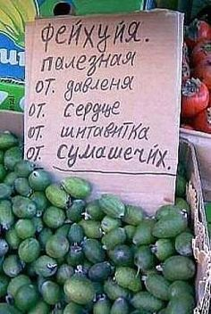 Питомники для садов России, Урала, Сибири, саженцы, семена, каталоги - Сады Сибири