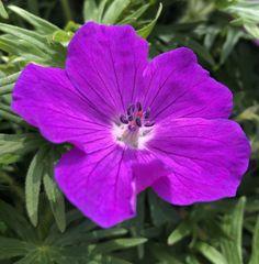 "Caroline M. Yoachim on Twitter: ""Photos from today's run. #FlowerReport… "" Dogwood Trees, Neon Purple, Twitter, Flowers, Photos, Pictures, Royal Icing Flowers, Flower, Florals"