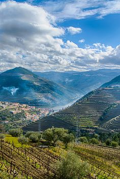 Douro Valley, Portugal Family Traveling the World: www.cashcortez.com  .  Travel / Places to Visit / Travel Destinations / Travel Tips / Places to Travel / Places to Go / Bucket List