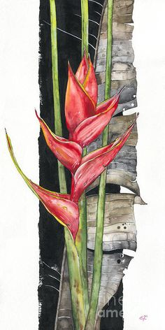 Heliconia 01 Elena Yakubovich Art Print by Elena Yakubovich. All prints are professionally printed, packaged, and shipped within 3 - 4 business days. Choose from multiple sizes and hundreds of frame and mat options. Watercolor Projects, Watercolor And Ink, Watercolor Flowers, Watercolor Paintings, Tropical Art, Tropical Flowers, Silk Art, Arte Floral, Silk Painting
