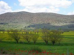 https://flic.kr/p/6k4fY7 | Green, yellow and red | Spring landscape close to Tripoli in Peloponnese, Greece