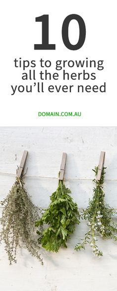 to help you grow all the herbs you'll ever need If being a green thumb doesn't come naturally, this is the only herb-growing guide you will need.If being a green thumb doesn't come naturally, this is the only herb-growing guide you will need. Vege Garden Ideas, Herb Garden Design, Vegetable Garden, Garden Plants, Indoor Plants, Growing Herbs, Growing Vegetables, Container Gardening, Gardening Tips