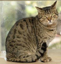 Chat qui ressemble comme 2 gouttes d'eau à ma jolie Willow <3