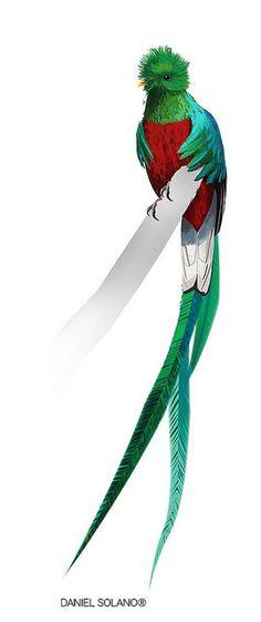 quetzal by Tolomuco, via Flickr