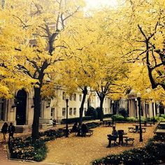 It was all yellows and golds this Autumn afternoon in the courtyard of Columbia University, November, 2013 . Lower Manhattan, Wonderful Places, Beautiful Places, University Architecture, Hill Interiors, A Whole New World, Concrete Jungle, Mellow Yellow, Kochi