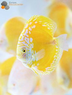 Hay vida en el mar