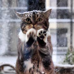pleaase mom let me in//