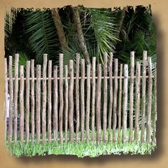 Our Rustic Eucalyptus Fencing is made from random-height eucalyptus poles that are arsenic-free. They offer an even more exotic look than rustic bamboo. Wattle Fence, Bamboo Fence, Garden Fencing, Garden Art, Redwood Fence, Country Fences, Rustic Fence, Farm Fence, Fence Design