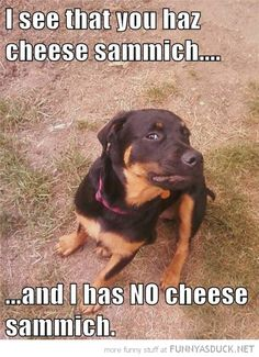 Cheese Sammich....if Elliott only had thumbs