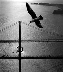 Seagull over the Golden Gate, 1959,Fred Lyon
