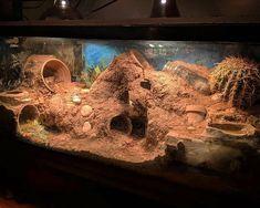 Pet DIYs in Reptile Products Worldwide reptiles DIYs Pet Products Reptile reptile terrarium ideas Worldwide Reptile Habitat, Reptile Room, Reptile Cage, Reptile Enclosure, Tarantula Enclosure, Reptile Tanks, Lizard Habitat, Reptile Decor, Terrariums Gecko