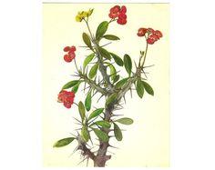 Botanical drawing art chart poster nature by BotanicalVintageArt