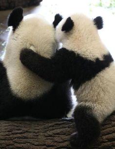 Panda bear love. <3!