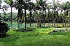 Veja fotos do Instituto de Arte Contemporânea e Jardim Botânico (Inhotim) - BOL Fotos