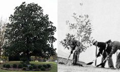 If you have passed through the main gate of Dobbins Air Reserve Base off of Cobb Parkway in Marietta, Georgia, you have driven past a magnolia tree that has stood as a sentinel for more than a half century. While not obvious to the casual observer, the tree has a link to December, President John F. Kennedy, the history of Dobbins ARB and the Georgia Air National Guard.