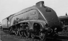 Mallard and the Canny Fox – Celebrating a 75 year old record Diesel Locomotive, Steam Locomotive, Union Of South Africa, Steam Railway, British Rail, Water Tower, Mallard, Steam Engine, East Coast