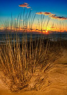 Sea Oat Sunrise - Outer Banks, North Carolina