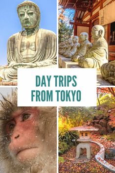 Our top tips for day trips from Tokyo travel destinations 2019 - Travel Photo Japan Travel Guide, Tokyo Travel, Asia Travel, Travel List, Day Trips From Tokyo, Excursion, Visit Japan, Kyoto Japan, Okinawa Japan