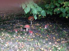 Achtung fliegende Pilze ...