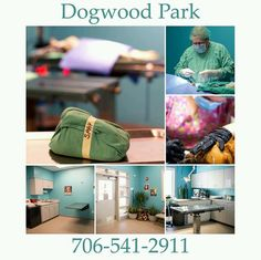 19 Best Low Cost Free Spay Neuter Events Amp Clinics Images