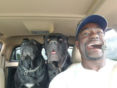 The four breeds most commonly called Mastiffs are the English Mastiff, the Neapolitan Mastiff, the Bull Mastiff and the Tibetan Mastiff. Cane Corso Italian Mastiff, Cane Corso Mastiff, Cane Corso Dog, Cane Corso Puppies, Mastiff Dogs, Rottweilers, Pitbulls, Big Dogs, I Love Dogs