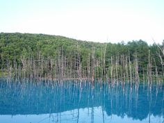 Blue Pond in Biei, Japan