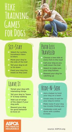 Try these creative summer games with your pet. ** More info could be found at the image url. #DogLover