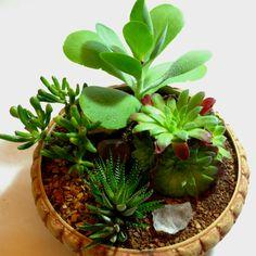 Succulent garden  #terrariums #plants #garden #love #romance #gifts #recycle #art #miniature #landscapes #succulents @Richard Perrello